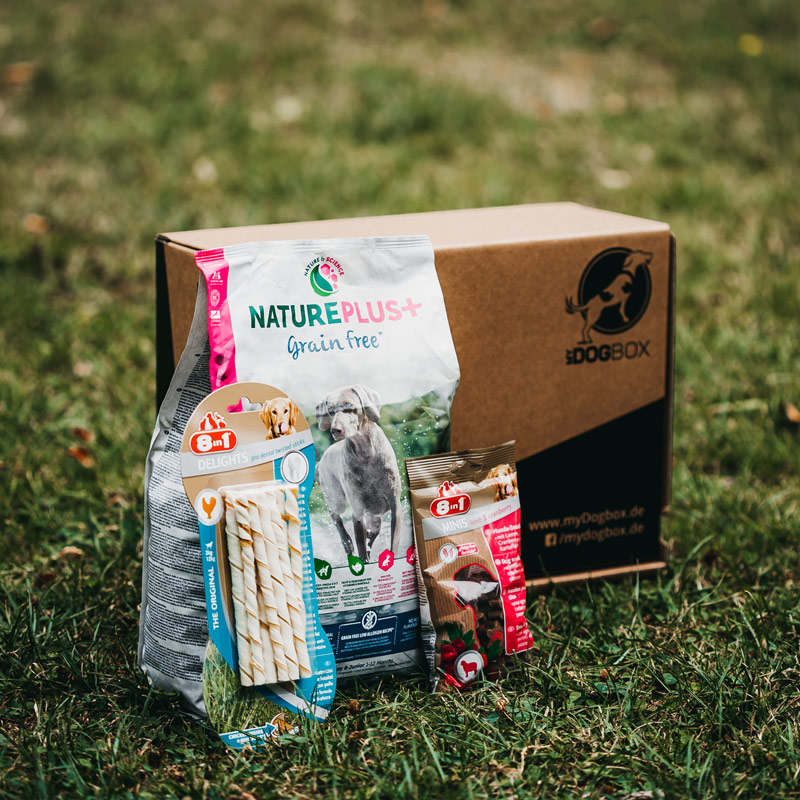 metacrew group launcht myDogBox